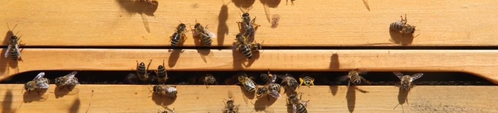 Bienenzuchtverein Dorfen